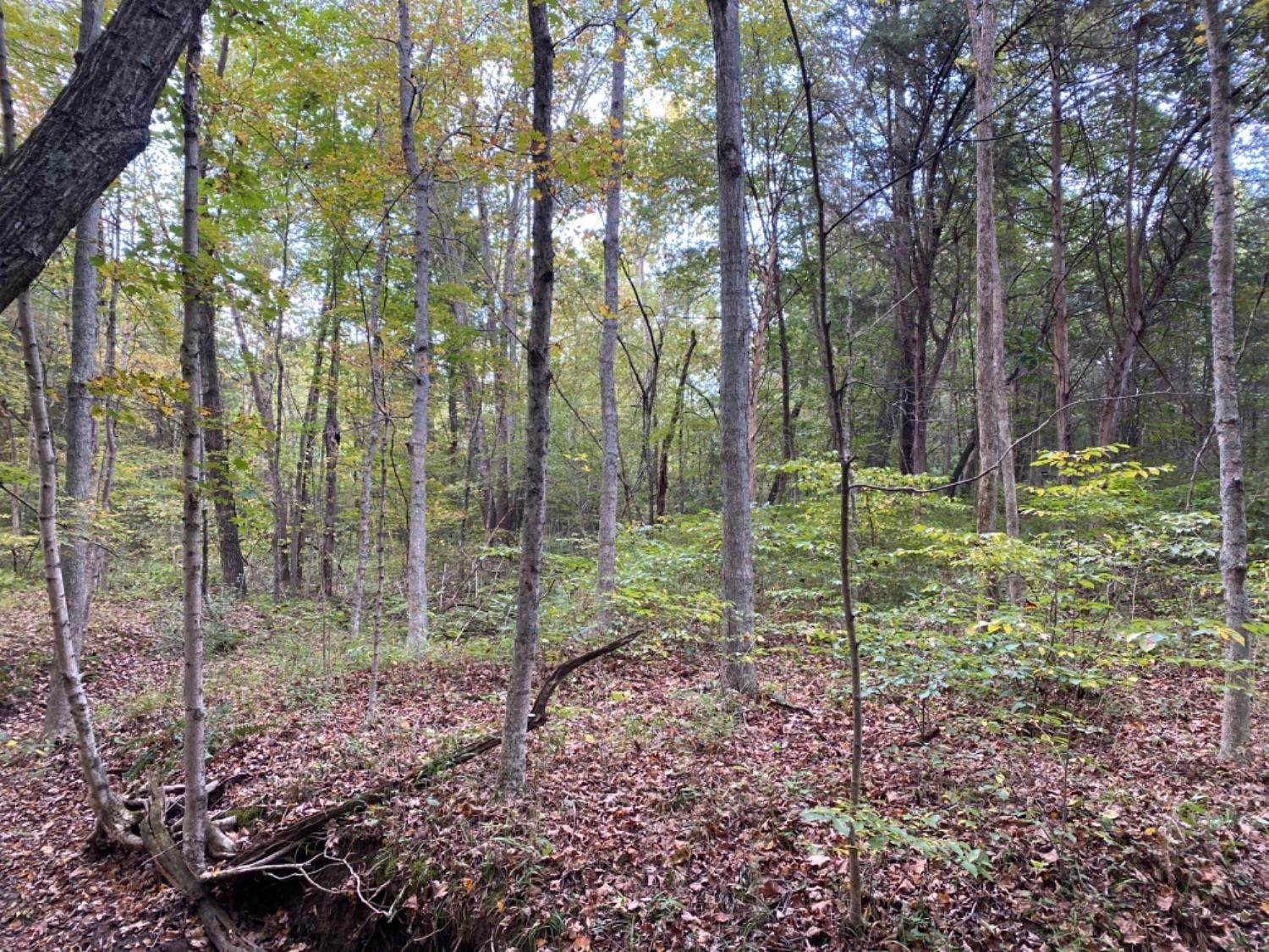 Acreage for Sale at 858 Greenbrier Road Scottown, Ohio 45679 United States